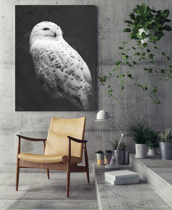 Snowy owl framed canvas