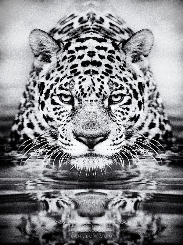 leopard photography print
