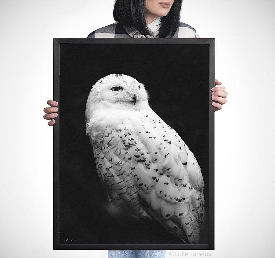 Snowy owl - Framed Canvas